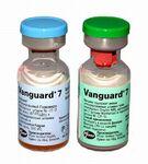 Вангард 7/Вакцина для собак и щенков 1 доза+растворитель