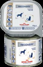 Royal Canin Recovery 195 гр./Роял канин консервы для собак и кошек в период анорексии, выздоровления